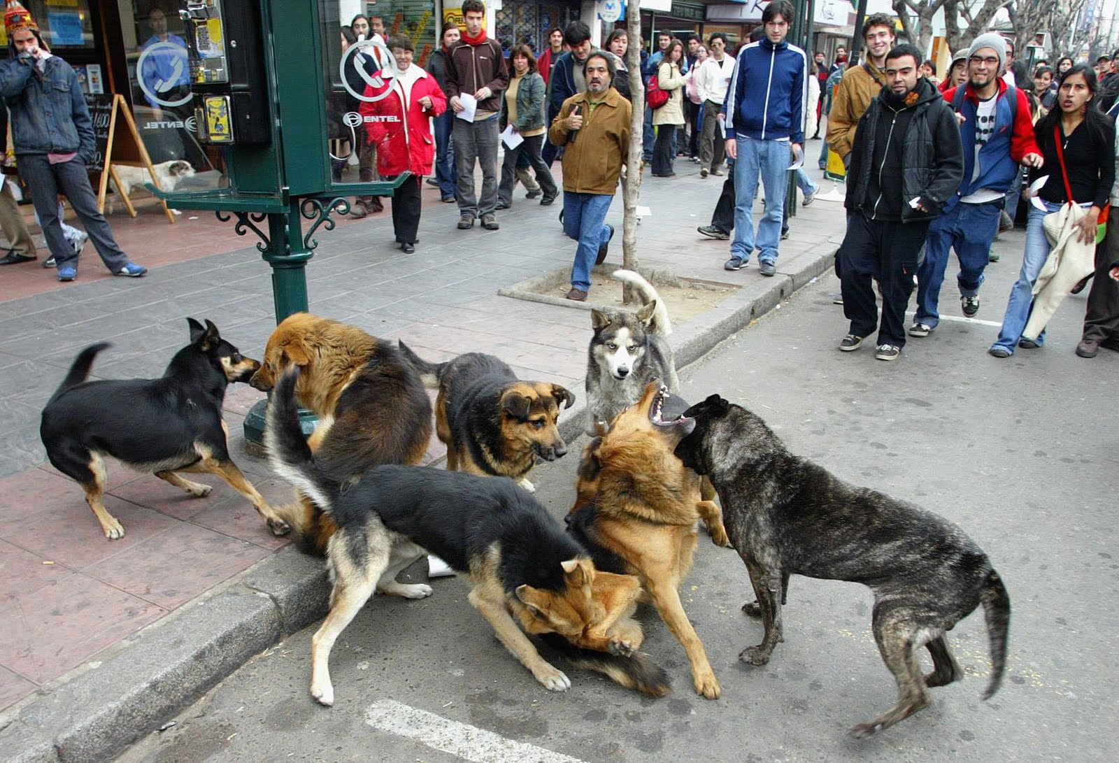 Historias de perros malas